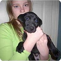 Adopt A Pet :: Jimmy John - Fostered in CT - Adamsville, TN