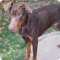 Adopt A Pet :: Jerry - Pending - New Richmond, OH