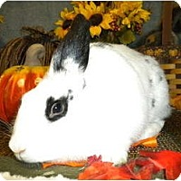 Adopt A Pet :: Cleo - Roseville, CA