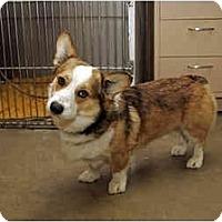 Adopt A Pet :: Frodo - Inola, OK