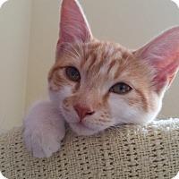 Adopt A Pet :: Lilo - Mountain Center, CA