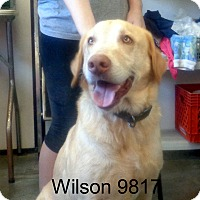 Adopt A Pet :: Wilson - Greencastle, NC