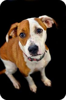 Hound (Unknown Type) Mix Dog for adoption in Fort Smith, Arkansas - Wendy