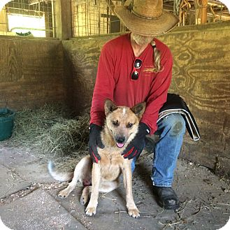 Cattle Dog Mix Dog for adoption in Hohenwald, Tennessee - Rufus