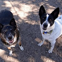 Adopt A Pet :: Joshie & Savvy - Seal Beach, CA