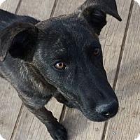 Adopt A Pet :: Iguazu - Evergreen, CO