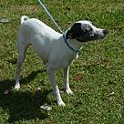 Adopt A Pet :: Gracelyn