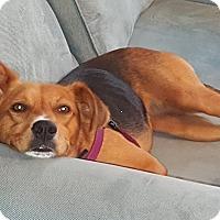 Adopt A Pet :: URGENT!!! April - Shrewsbury, NJ