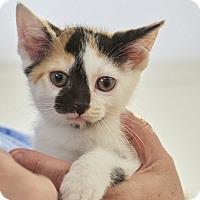 Adopt A Pet :: June Bug - Knoxville, TN