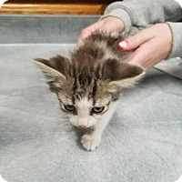 Adopt A Pet :: Dalton - Carroll, IA