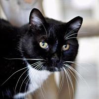 Adopt A Pet :: Foxtail - Park City, UT