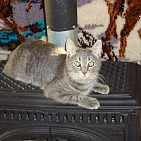 Adopt A Pet :: Eddy - 100 Mile House, BC