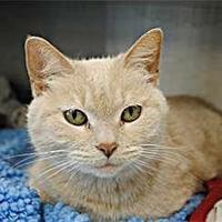 Adopt A Pet :: Roxxie - Westbrook, ME