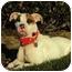 Photo 4 - American Pit Bull Terrier/Bull Terrier Mix Dog for adoption in Burbank, California - Maxine - PLS READ STORY