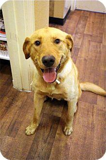 Labrador Retriever Mix Dog for adoption in Cumming, Georgia - Yogi