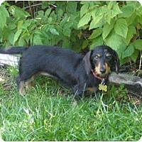 Adopt A Pet :: Diva-Adoption Pending - San Jose, CA
