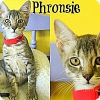 Adopt A Pet :: Phronsie - Mobile, AL