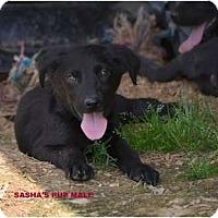 Adopt A Pet :: Cashew - New Boston, NH
