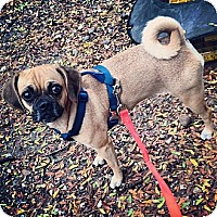Adopt A Pet :: Wednesday - New York, NY
