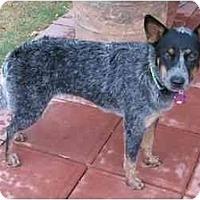 Adopt A Pet :: Geena *Adoption Pending* - Phoenix, AZ