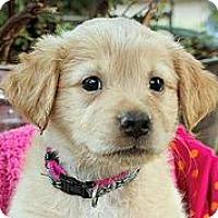 Adopt A Pet :: Snuggles - Austin, TX