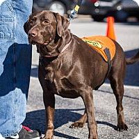Adopt A Pet :: Gus - Cumming, GA