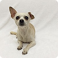 Adopt A Pet :: Spanky - Mission Viejo, CA