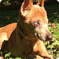 Adopt A Pet :: Faith - Wilmington, DE