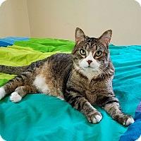Adopt A Pet :: Annie (self-assured & sweet) - Roseville, MN