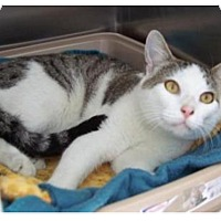 Adopt A Pet :: Farley - Englewood, FL