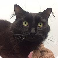 Adopt A Pet :: Tsunami - Chicago, IL
