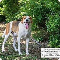 Adopt A Pet :: Prince - North Myrtle Beach, SC