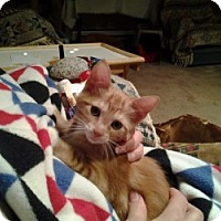 Adopt A Pet :: Peaches - Middletown, CT