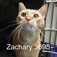 Adopt A Pet :: Zachary - Manassas, VA