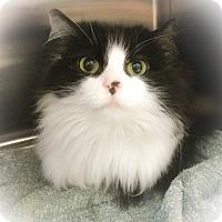 Adopt A Pet :: Whisper - Webster, MA
