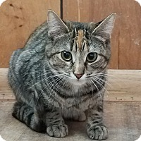 Adopt A Pet :: Mali - Rochester, MN