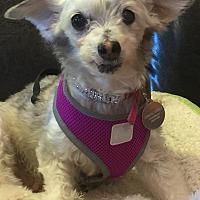 Adopt A Pet :: BELLA  DONNA - Palm Desert, CA