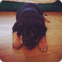 Adopt A Pet :: Indiana - Saskatoon, SK