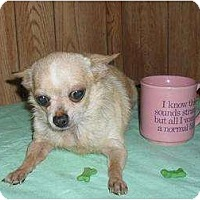Adopt A Pet :: Rayna - Chandlersville, OH