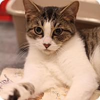 Adopt A Pet :: Fred - Sacramento, CA