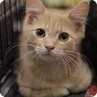 Adopt A Pet :: Apollo - Sacramento, CA