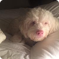 Adopt A Pet :: Rupert - Austin, TX
