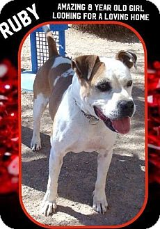 American Bulldog/Pit Bull Terrier Mix Dog for adoption in Las Vegas, Nevada - Ruby