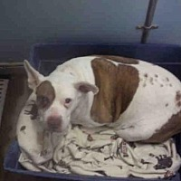 Adopt A Pet :: *BABY - Lake Isabella, CA