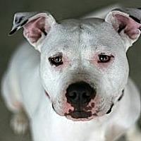 Adopt A Pet :: Felicity - Newark, DE