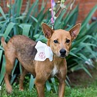 Adopt A Pet :: Hilaro - Fayetteville, AR