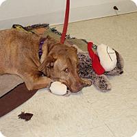 Adopt A Pet :: Missy - Muskegon, MI