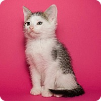 Adopt A Pet :: Miney - Jersey City, NJ