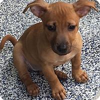 Adopt A Pet :: Paige - Washington, PA