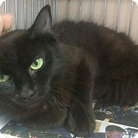 Adopt A Pet :: Amara - East Brunswick, NJ